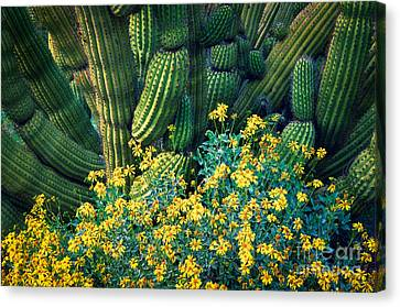 Organ Pipes Canvas Print