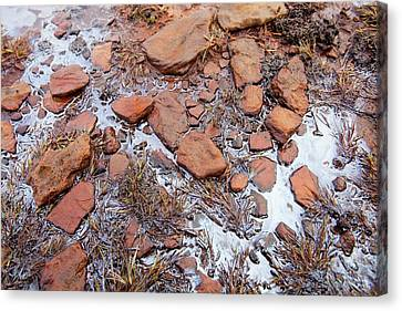 Organic Algal Bloom On A Bog Canvas Print by Ashley Cooper