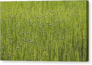 Organic Green Grass Backround Canvas Print