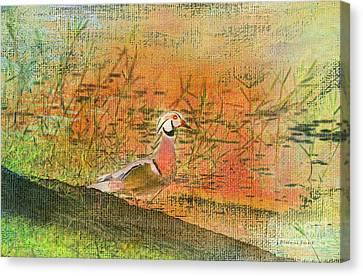Oriental Duck Canvas Print by Deborah Benoit