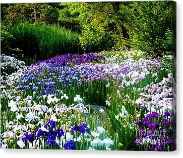 Oriental Ensata Iris Garden Canvas Print by Carol F Austin