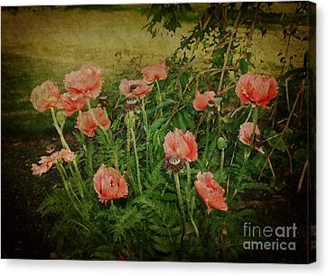 Oriental Poppies Canvas Print by Rosemary Aubut