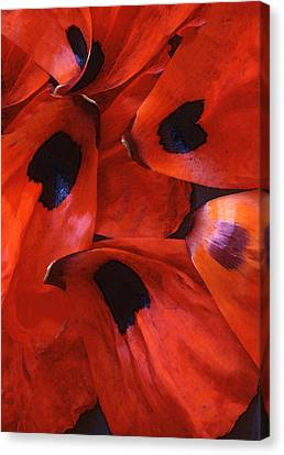 Oriental Poppy IIi Canvas Print