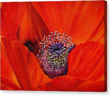 Oriental Poppy Canvas Print by Jo Appleby