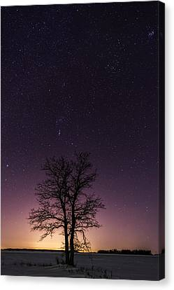 Orion Tree Canvas Print