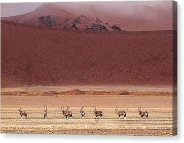 Wild Dunes Canvas Print - Orixs by Marco Tagliarino