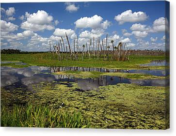 Orlando Wetlands Cloudscape 2 Canvas Print by Mike Reid