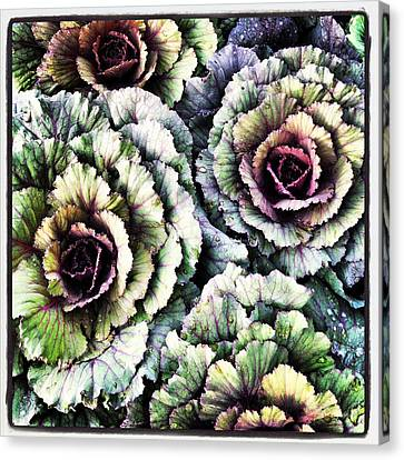 Ornamental Cabbage - I Phone Canvas Print by Brooke T Ryan