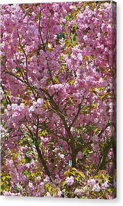 Ornamental Cherry Tree Canvas Print by Sharon Talson