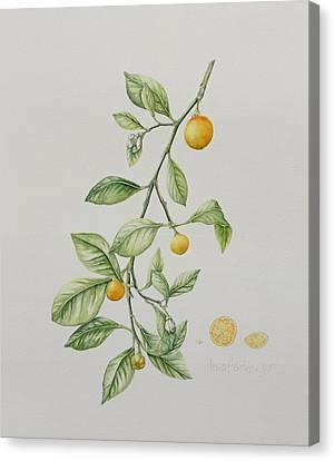 21st Century Canvas Print - Ornamental Orange  by Iona Hordern