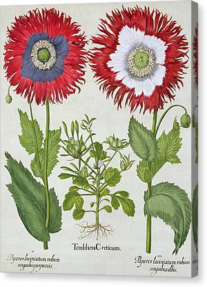 Ornamental Poppies, From The Hortus Canvas Print
