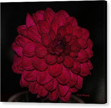 Ornate Red Dahlia Canvas Print