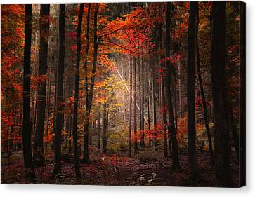 Orton Forest Canvas Print by Philippe Sainte-Laudy