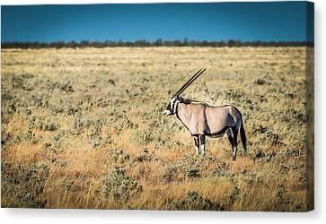 Oryx Profile - Color Oryx Photograph Canvas Print by Duane Miller