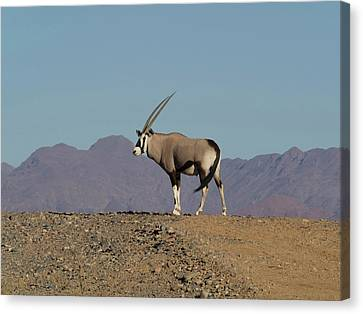Oryx Standing On A Hill, Namib-naukluft Canvas Print by Panoramic Images