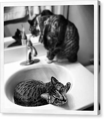 Oskar And Klaus At The Sink Canvas Print by Mick Szydlowski