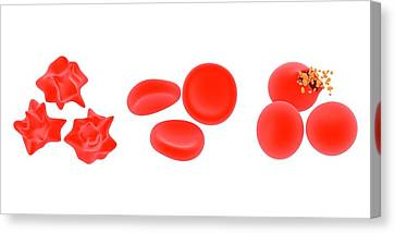 Osmosis In Red Blood Cells Canvas Print