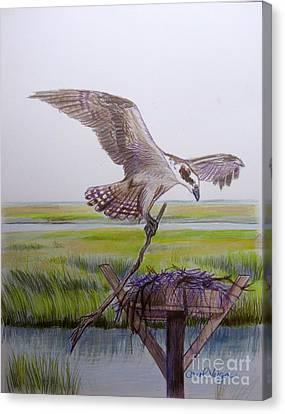 Osprey Canvas Print - Osprey Building His Nest by Carol Veiga