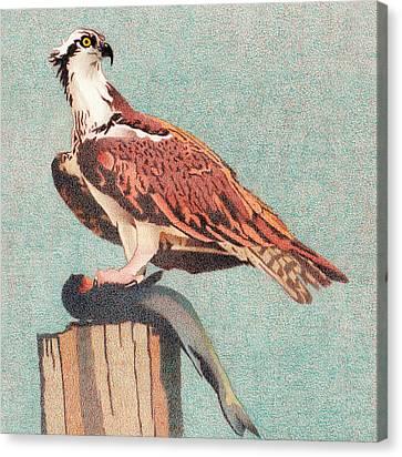 Osprey Canvas Print - Osprey by Dan Miller