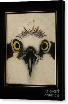 Osprey Canvas Print - Osprey by Island Time Artwork by Dawn Nadeau Olmsted