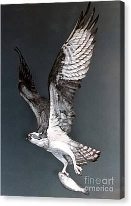 Osprey Canvas Print by DiDi Higginbotham