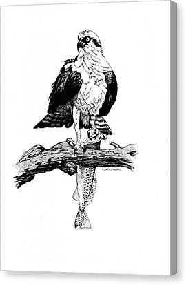 Osprey Canvas Print - Osprey by J W Kelly