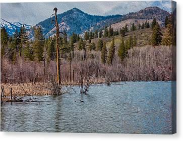 Osprey Nest In A Beaver Pond Canvas Print by Omaste Witkowski