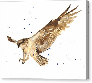 Osprey Painting Canvas Print by Alison Fennell