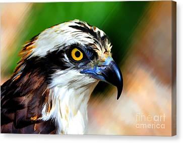 Osprey Portrait Canvas Print by Dan Friend