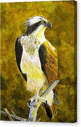 Canvas Print featuring the painting Osprey Profile by Stan Tenney