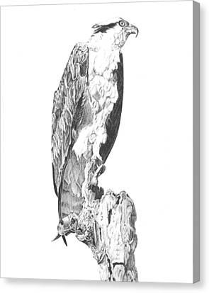 Osprey Canvas Print - Osprey by Reppard Powers
