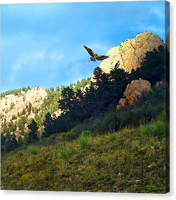 Osprey Canvas Print by Ric Soulen