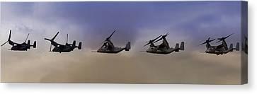Osprey Transformation Canvas Print
