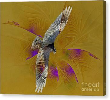 Osprey Wild Canvas Print by Deborah Benoit