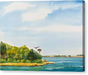 Ospreys On The Vineyard Watercolor Painting Canvas Print by Michelle Wiarda