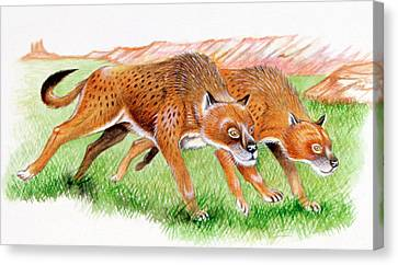 Osteoborus Prehistoric Canines Canvas Print