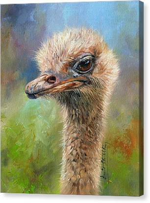Ostrich Canvas Print by David Stribbling