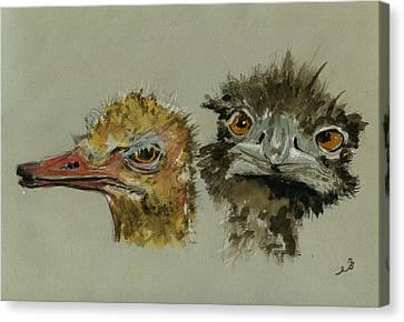 Ostrich Canvas Print - Ostrichs Head Study by Juan  Bosco