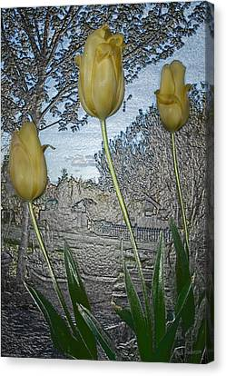 Other World Tulips Canvas Print by Mick Anderson