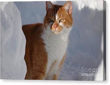 Canvas Print featuring the photograph Otis by Christiane Hellner-OBrien