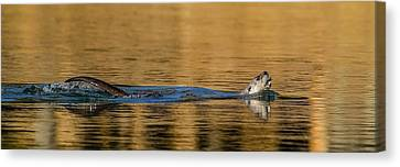 Canvas Print featuring the photograph Otter Catch by Yeates Photography