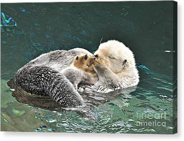 Canvas Print featuring the photograph Otter Dreams by Mindy Bench