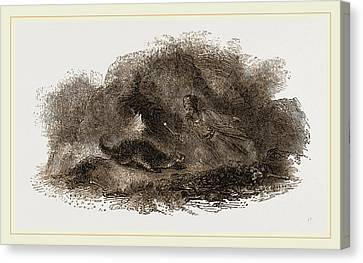 Otter In Cave Canvas Print by Litz Collection