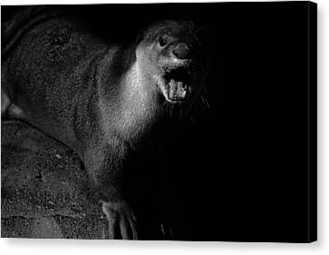 Otter Canvas Print - Otter Wars by Martin Newman