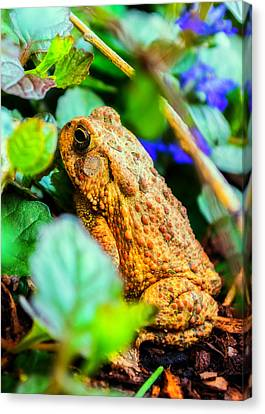 Our Backyard Visitor Canvas Print by Jon Woodhams