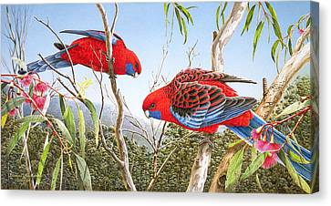 Our Beautiful Home - Crimson Rosellas Canvas Print by Frances McMahon