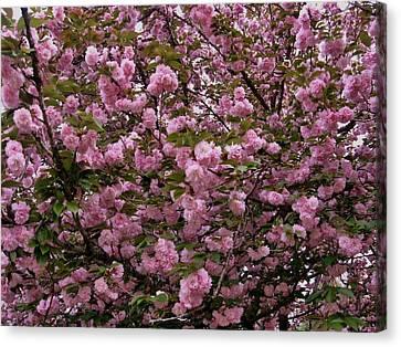 Our Cherry Tree Canvas Print by Mimi Saint DAgneaux
