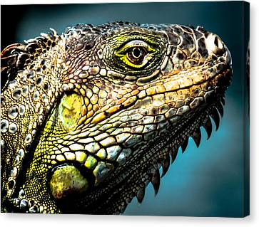 Our Creators Mosaic Art Canvas Print by Karen Wiles