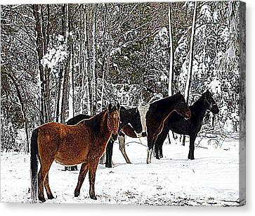 Our Horses Canvas Print by Vivian Cook