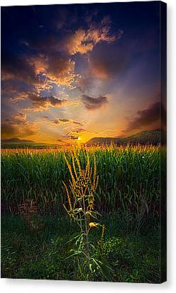 Our Time Together Canvas Print by Phil Koch